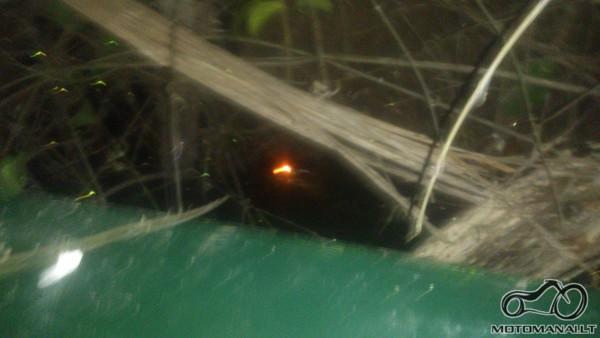 aligatoriu akytes dziunglese...:)