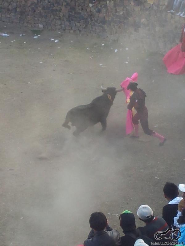 corrida de toros/Coporaque