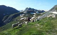 Avių 'muitinė'