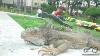 Guayaquil iguanu parkas