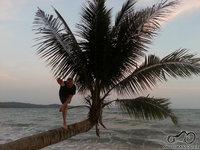 Ech... kodėl palmės pas mus neauga :)
