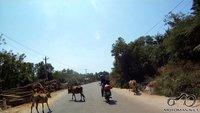 Pas juos be plytų dar ir karvės keliuose ganosi :) Nėro tokio supratimo kaip aptvaras, karvės pačios sau šeiminkės :)