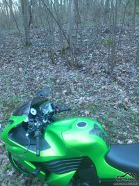 motociklas prie zydinciu zibuciu (nenuskintu, o auganciu pamiskeje).