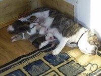 Naminiai gyvūnėliai