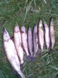 Paplepėkim apie žvejybą