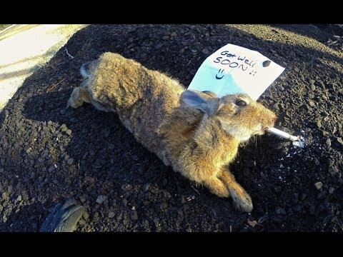 George the Rabbit